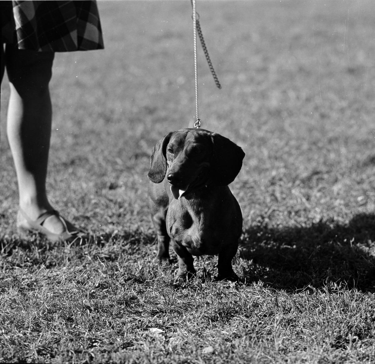 Wystawa psów [3]