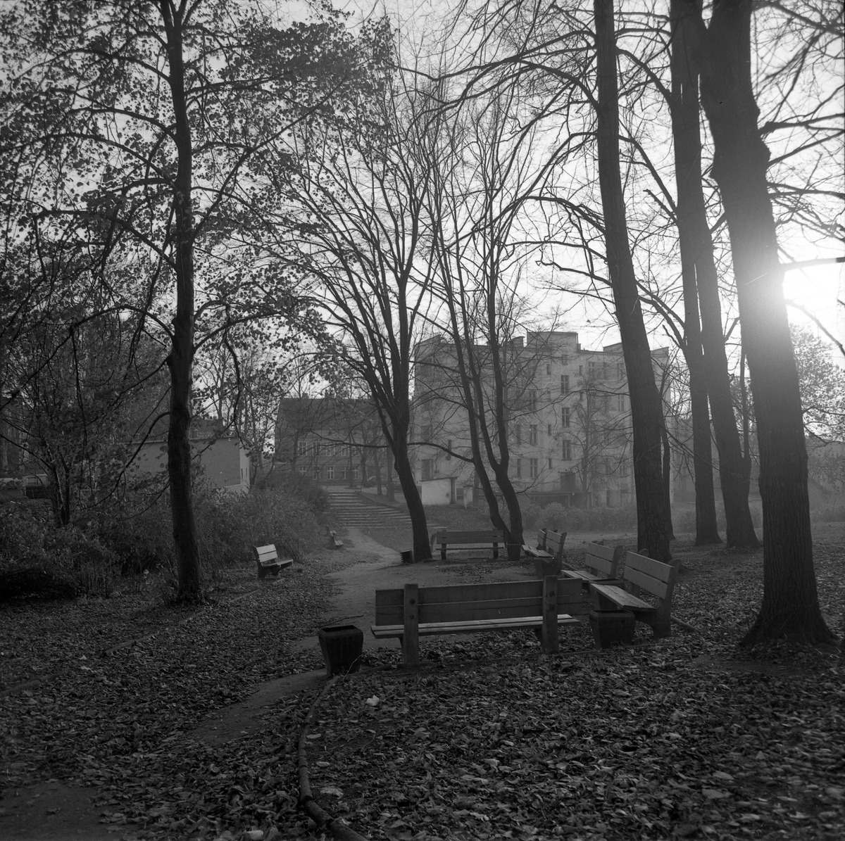 Park po cmentarzu komunalnym [7]