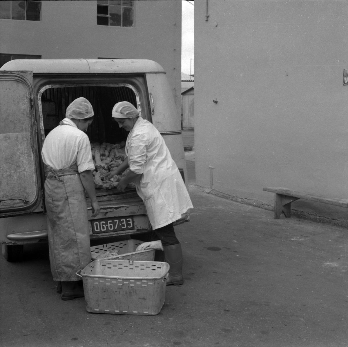 Pracownicy Zakładów Mięsnych [6]