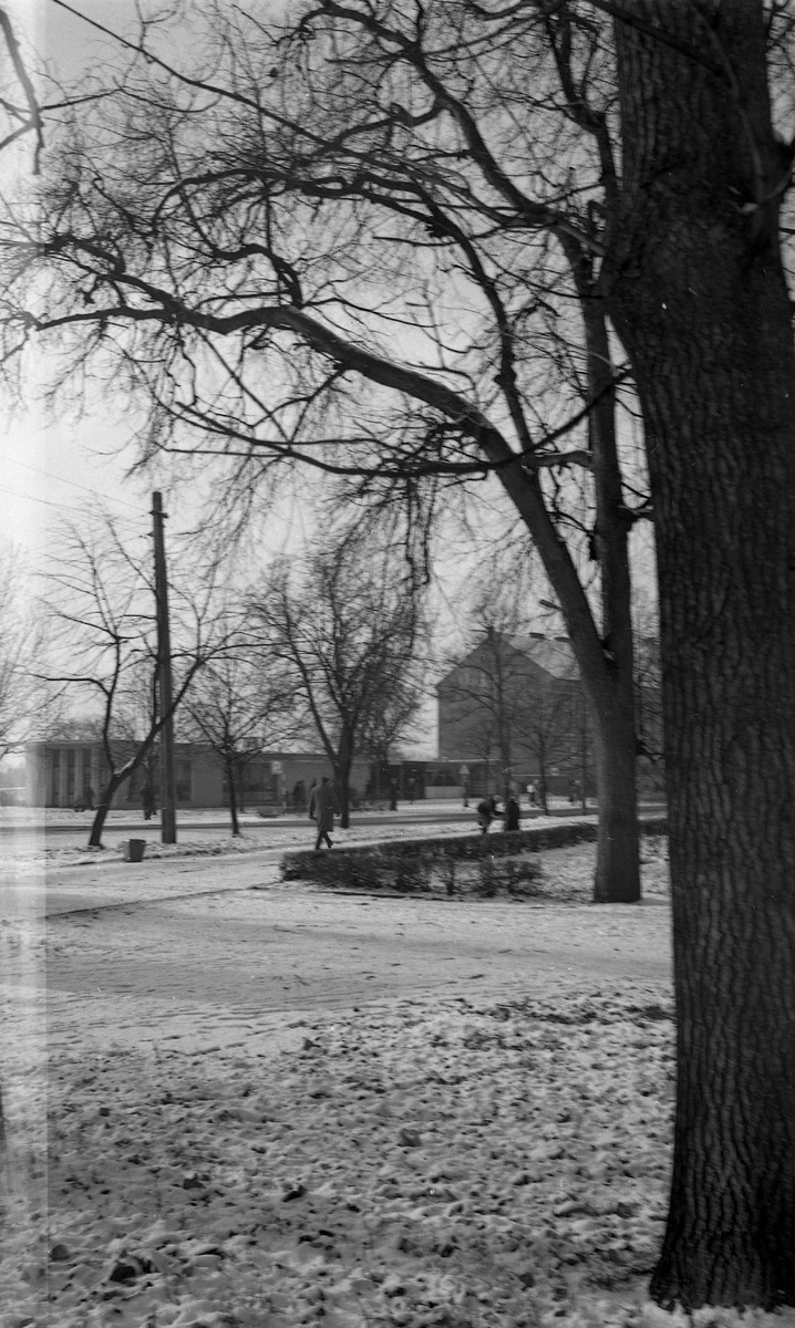 Park po cmentarzu komunalnym [2]