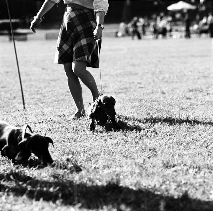 Wystawa psów [16]