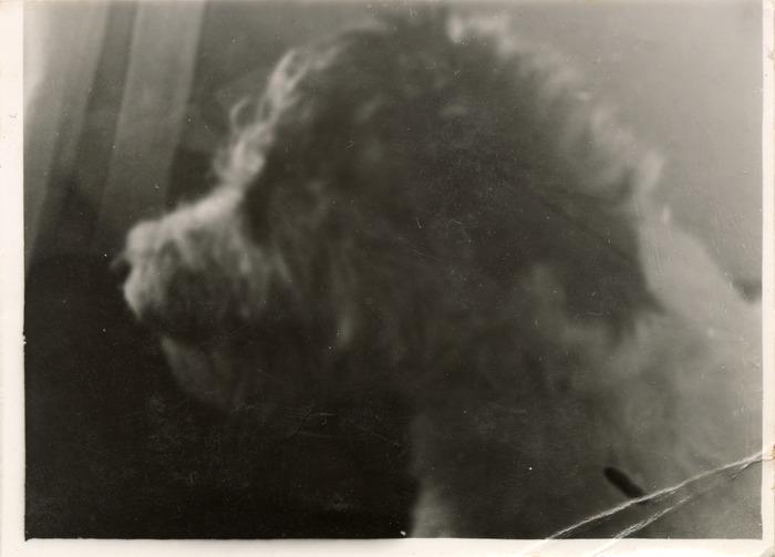 Portret psa [2]