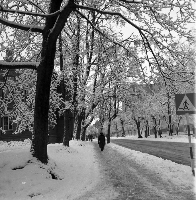 Zima 1988/1989 r. [4]