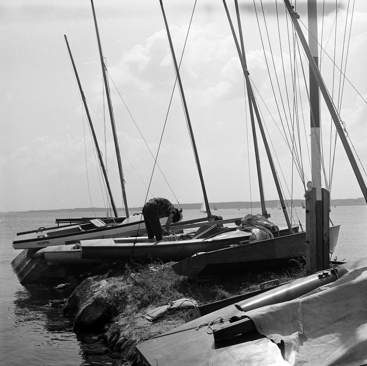 Łódki regatowe [1]