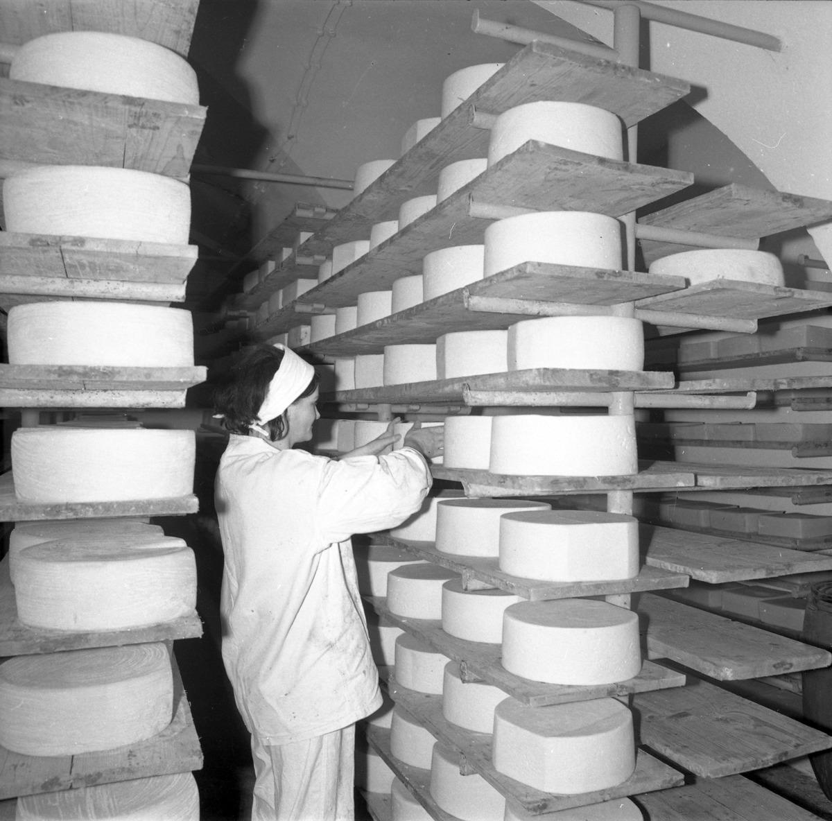 Dojrzewalnia serów (SEREX)