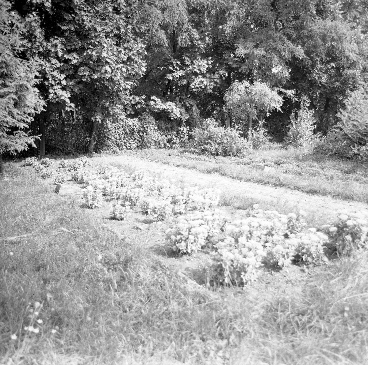 Cmentarz wojenny żołnierzy radzieckich [4]