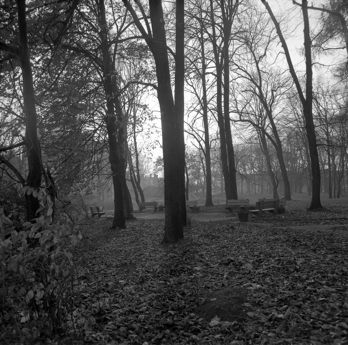 Park po cmentarzu komunalnym [6]
