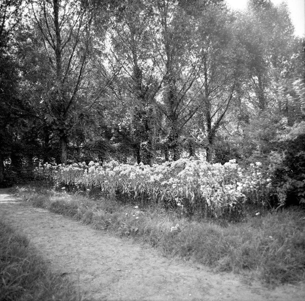 Cmentarz wojenny żołnierzy radzieckich [9]
