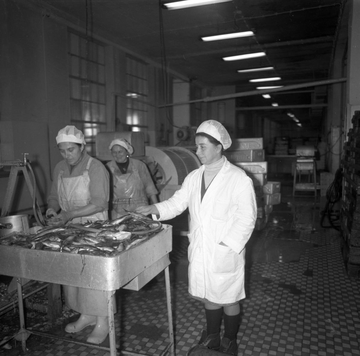 Pracownicy Zakładów Rybnych [4]