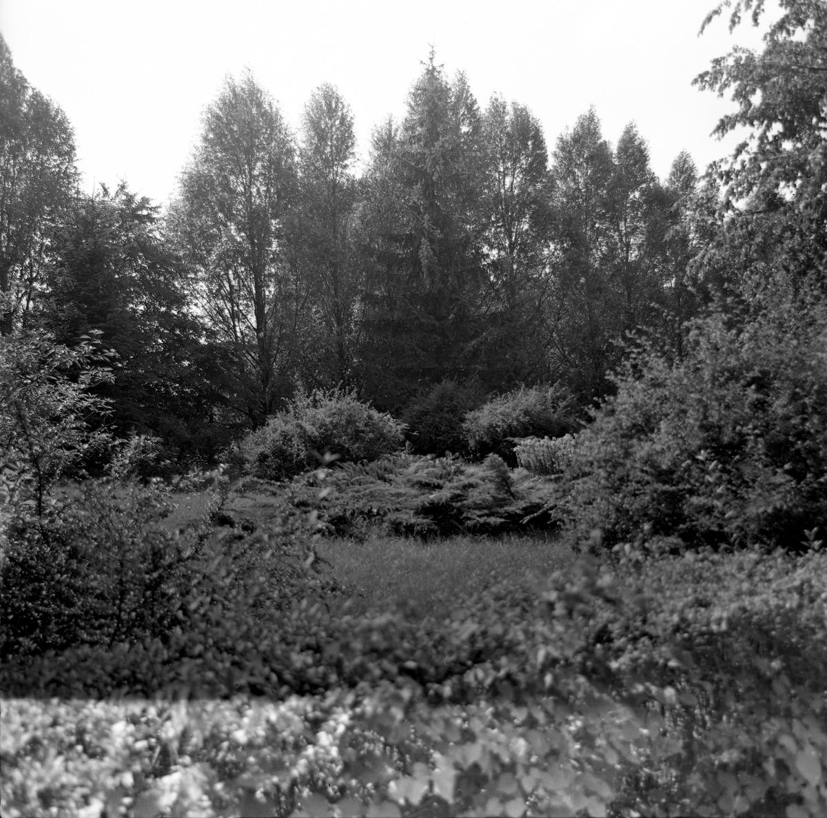Cmentarz wojenny żołnierzy radzieckich [6]