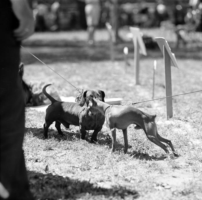 Wystawa psów [14]
