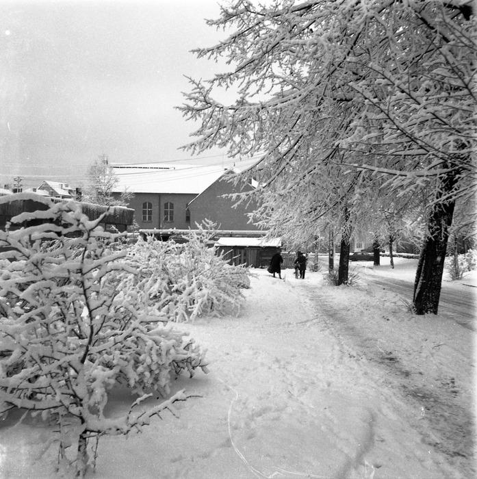 Zima 1988/1989 r. [19]