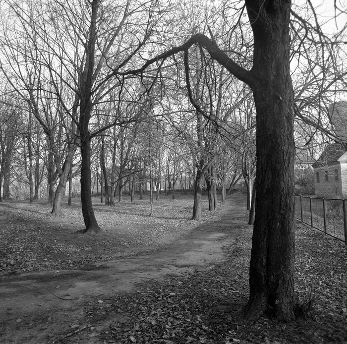 Park po cmentarzu komunalnym [9]