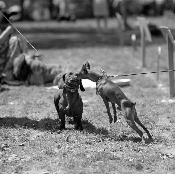 Wystawa psów [13]