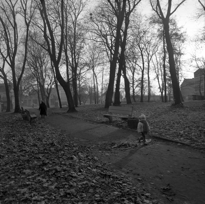 Park po cmentarzu komunalnym [11]