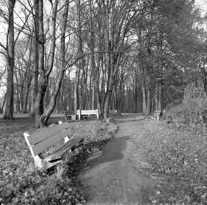 Park po cmentarzu komunalnym [4]