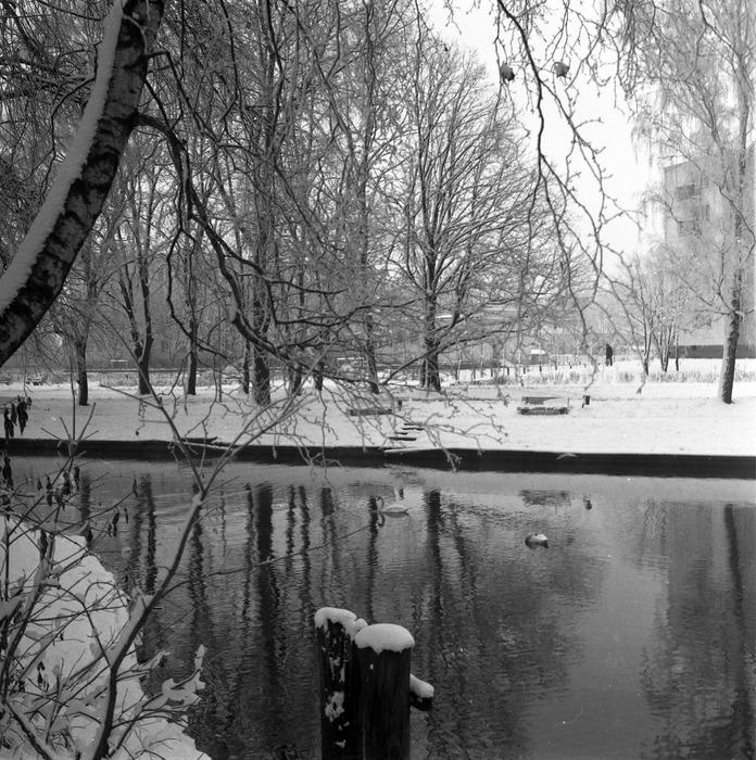 Zima 1988/1989 r. [8]