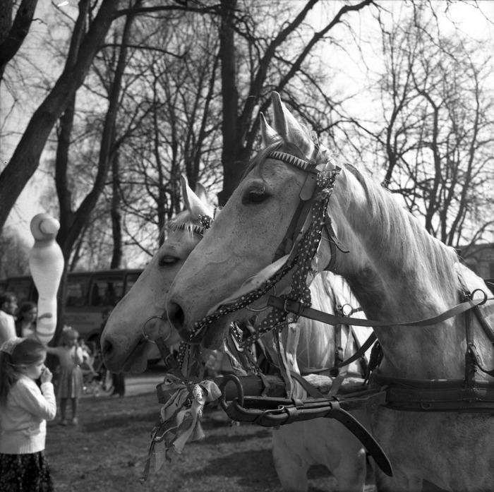 Święto Wiosny w Wegorzewie [5]